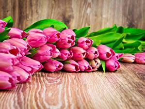 Фото Тюльпаны Розовый