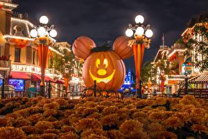 Фотография Штаты Диснейленд Парк Хеллоуин Здания Тыква Хризантемы Калифорния Анахайм Дизайна Уличные фонари Ночные город