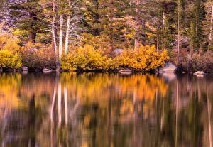 Обои США Озеро Осень Леса Камни Калифорния Кусты Mammoth Lakes Природа картинки