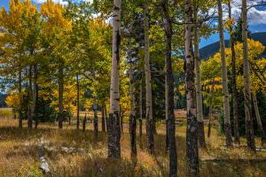 Фото Штаты Парки Осенние Деревья Березы Rocky Mountain National Park