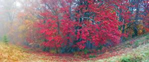 Фото Украина Осенние Закарпатье Деревья Листья Природа