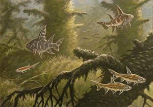 Картинки Подводные Древние животные Рыбы Рисованные Acanthodii Животные