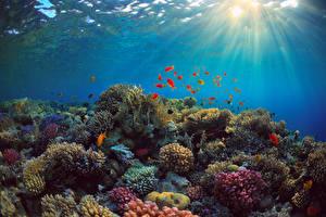 Обои Подводный мир Кораллы Рыбы Лучи света Природа
