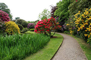 Картинка Великобритания Парки Biddulph Grange Garden Природа
