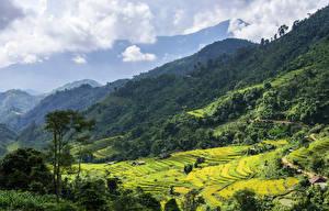 Обои Вьетнам Горы Лес Поля Облако Hoang Su Phi Природа