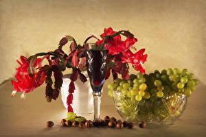 Фото Вино Виноград Орехи Бокалы Schlumbergera (Zygocactus) Продукты питания Цветы