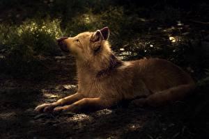 Фото Волки Рисованные