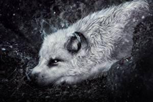 Фото Волки Рисованные Животные