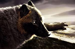 Картинки Волки Рисованные Голова