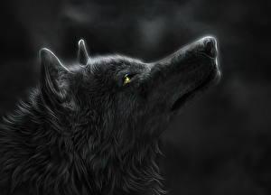 Картинка Волки Рисованные Голова Ночные Сбоку Животные