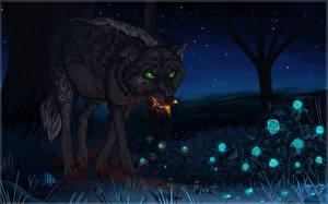 Фото Волки Рисованные Ночные Животные