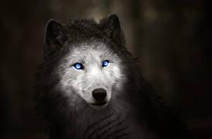 Фото Волки Рисованные Ночные Голова