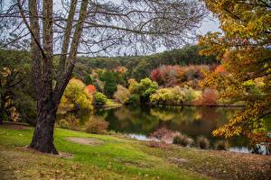 Фотография Австралия Осенние Парки Пруд Деревья Mount Lofty Botanic Garden