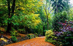 Фотографии Австралия Сады Осенние Деревья Alfred Nicholas Memorial Gardens