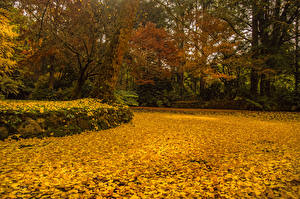 Обои Австралия Парки Осень Листья Alfred Nicholas Memorial Gardens Природа картинки