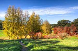 Фотографии Австралия Парки Осень Деревья Трава Mount Lofty Botanic Garden