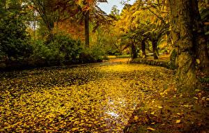 Фотография Австралия Парки Осенние Пруд Листья Alfred Nicholas Memorial Gardens