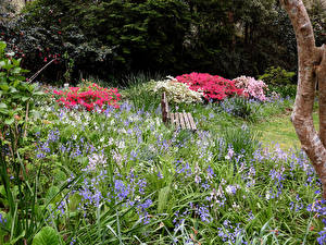 Картинки Австралия Парк Скамейка Колокольчик George Tindale Memorial Garden in Sherbrooke Природа