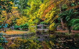 Обои Австралия Парки Пруд Осень Мосты Деревья Alfred Nicholas Memorial Gardens Природа