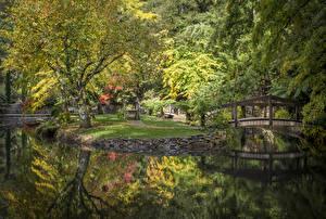Фотография Австралия Парки Пруд Мосты Осенние Деревья Alfred Nicholas Memorial Gardens