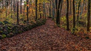 Фотографии Осенние Леса Камень Деревья Мох Листва Природа