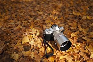 Обои Осенние Фотокамера Листва Olympus OM-D