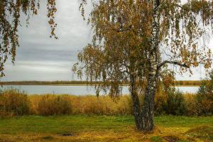 Картинки Осенние Речка Деревья Березы