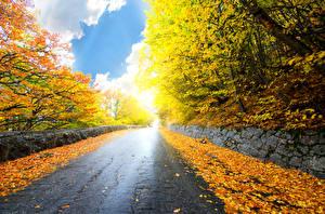 Фотография Осенние Дороги Листья Природа
