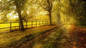 Картинка Осенние Дороги Деревья Ограда Листва