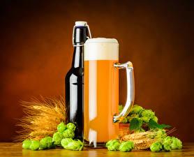 Фото Пиво Хмель Цветной фон Бутылка Кружка Пеной Колосок Еда