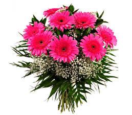 Картинка Букеты Герберы Белом фоне Розовый цветок
