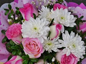 Фотография Букеты Розы Хризантемы Вблизи Цветы