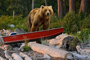 Фотография Медведи Бурые Медведи Лодки