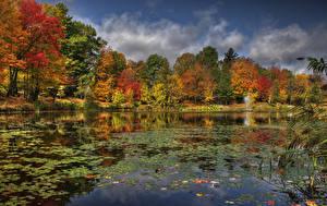 Обои Канада Речка Осенние Деревья Sherbrooke Quebec Природа