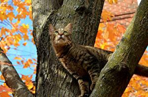 Обои Коты Ветвь Ствол дерева Животные
