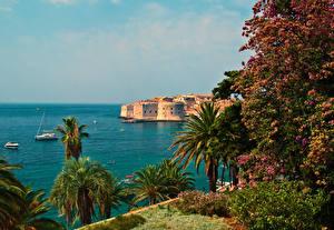 Фотографии Хорватия Море Берег Дома Пальмы Dubrovnik