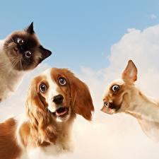 Фотография Собаки Кошки Смешной Взгляд Животные