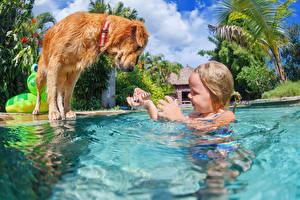 Картинка Собаки Ракушки Вода Плавательный бассейн Девочки Ребёнок Животные