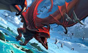 Фотография Драконы Чайка Злость