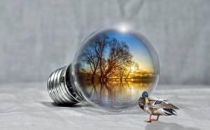 Картинки Утки Озеро Креатив Лампочка животное
