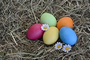Фото Пасха Яйца Разноцветные Сено Продукты питания