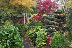 Картинка Англия Сады Осенние Кусты Walsall Garden