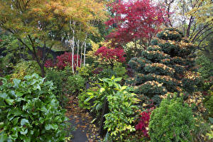 Картинка Англия Сады Осенние Кустов Walsall Garden Природа