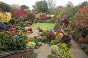 Фотографии Англия Сады Осенние Кусты Walsall Garden Природа