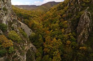 Фото Леса Осенние Утес Природа