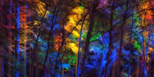 Картинки Леса Осенние Деревья Природа