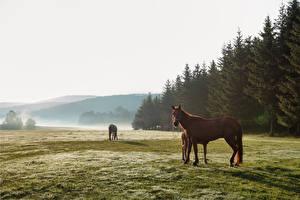 Картинки Луга Лошади Животные