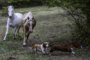 Фотографии Лошадь Собаки Два Бегущий животное