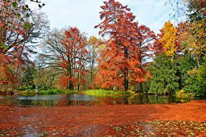 Обои Венгрия Парки Осенние Пруд Деревья Листва Botanical garden Szeged