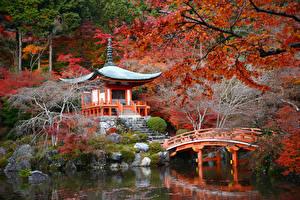 Картинка Япония Киото Сады Пруд Осенние Пагоды Мосты